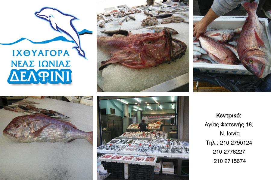 delfini_kat